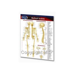 Skeleton-Chart