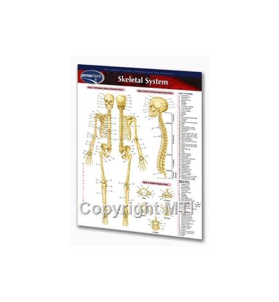 Skeleton Chart Whole Body Healing